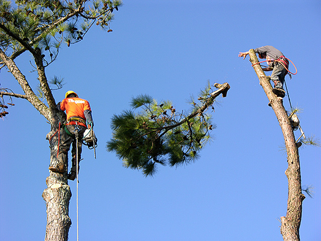 If You Are In Need Of A Good Residential Tree Service Naples Has A Lot To Offer